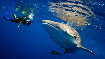 Nichts für schwache Nerven: 15 schaurige Dinge, die Taucher im Meer entdeckt haben