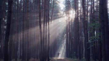 Wie ein Mann 27 Jahre lang in einem Wald lebte und mit 987 Diebstählen davon kam.