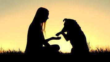 Ein Paar nimmt einen verhungernden Hund auf, was dann passiert ist unglaublich...