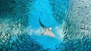 Die gefährlichsten Fische der Welt