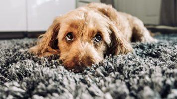9 Dinge, die Hunde an uns Menschen nicht mögen