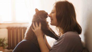 Wie Katzen mit uns kommunizieren