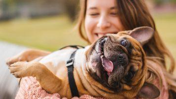 Die 15 frechsten Hunderassen
