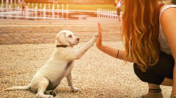 Das Geheimnis tierischer Verhaltensweisen